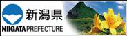 nigata-logo.png